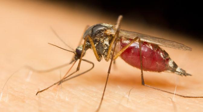 Mücke sticht zu.