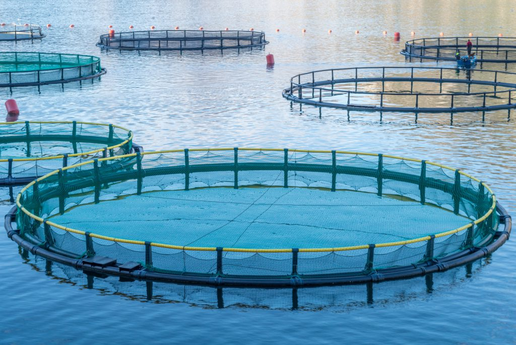 Fisch gesund oder giftig for Illinois fish farms