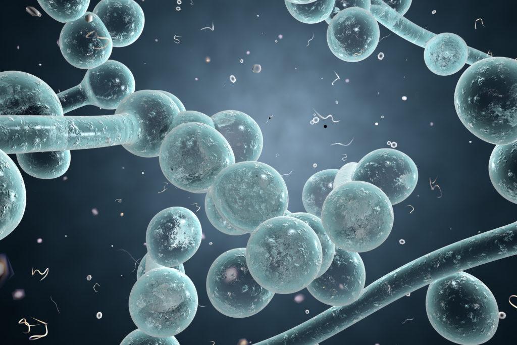 Ist eine Pilzerkrankung der Grund für die Beschwerden, handelt es sich meist um den Hefepilz Candida albicans. (Bild: Dr_Kateryna/fotolia.com)