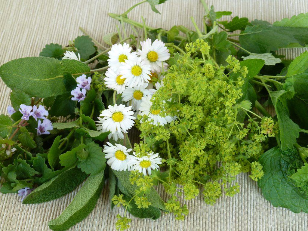 Frauenmantel, Gundermann, Melisse, Gänseblümchen. Bild: behewa - fotolia