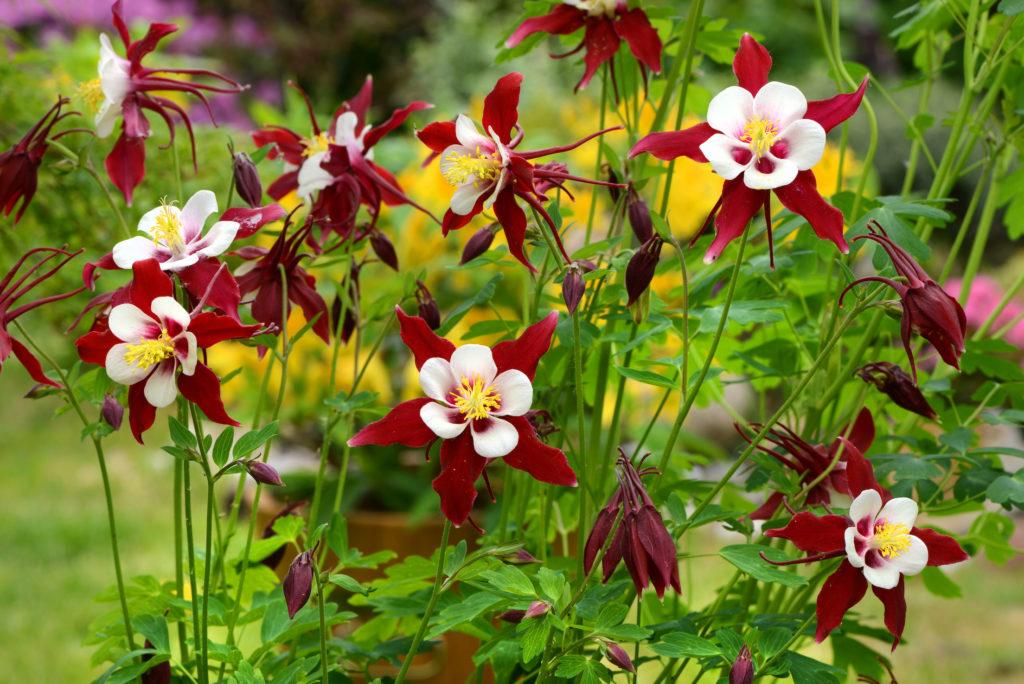Pflanzen bewässern in der Urlaubszeit. Bild:  K.-U. Häßler - fotolia