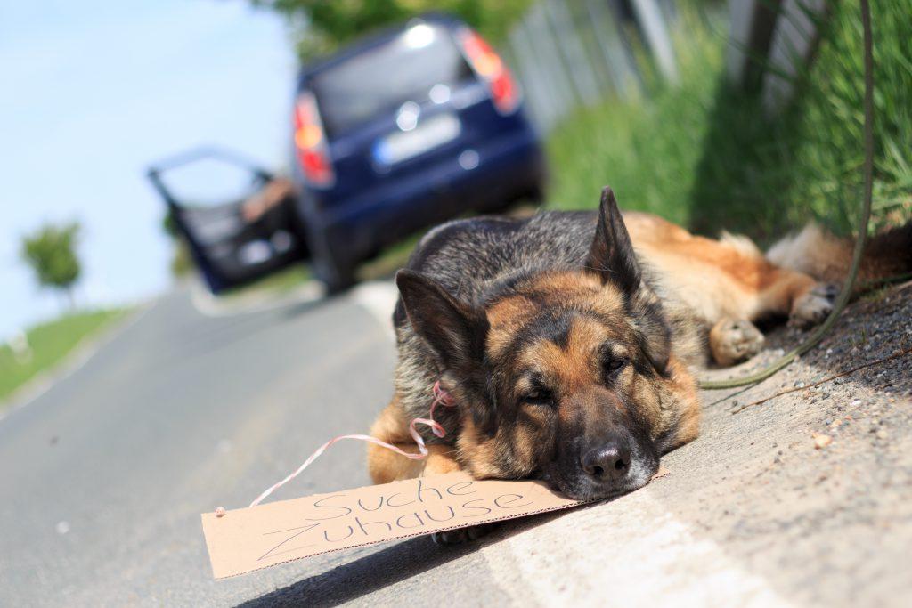 Gequälte Tiere. Bild: © juefraphoto - fotolia