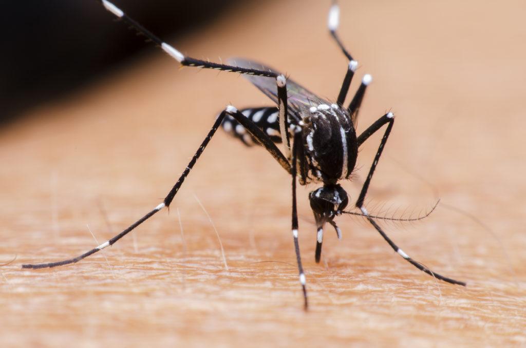 Seit der Einführung der gesetzlichen Meldepflicht am 1. Mai wurden hierzulande zwölf neue Zika-Infektionen registriert. (Bild: Flavio_Brazil/fotolia.com)