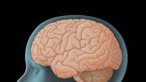 Forscher entdeckten bei einer Untersuchung, dass eine bestimmte Varaiante eines Gens bei Kindern Veränderungen im Gehirn verursacht. Dieses Gen erhöht im späteren Leben auch das Risiko für eine Alzheimererkrankung. (Bild: lom123/fotolia.com)