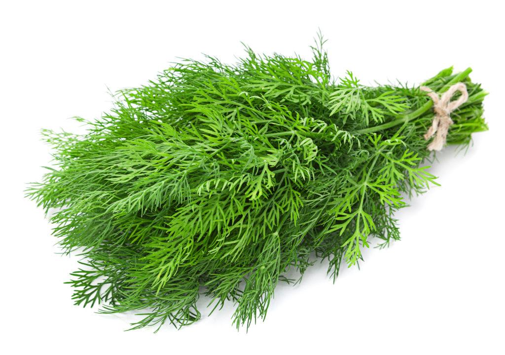 Gartenkräuter verfeinern den Geschmack von vielen Mahlzeiten. Forscher stellten jetzt fest, dass Dill und Petersillie noch viel mehr können. Sie enthalten Inhaltsstoffe, die uns vor Krebs schützen. (Bild: Leonid Nyshko/fotolia.com)