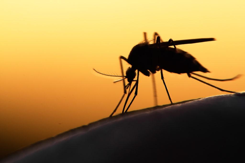 Experten machen sich wegen der Ausbreitung exotischer Mückenarten in Deutschland Sorgen. Manche Mücken können gefährliche Krankheiten übertragen. (Bild: mycteria/fotolia.com)