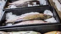 Wird Fisch zu warm gelagert, drohen nach dem Verzehr gesundheitliche Gefahren. Gekaufte Ware sollte daher immer gekühlt nach Hause gebracht werden. Was aber wenn der Kauf online erfolgt? (Bild: milkare/fotolia.com)