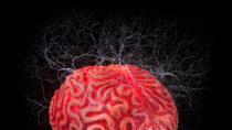Haben Sie häufig Erinnerungsprobleme? Dann könnten Ihnen die Ergebnisse einer neuen Studie aus den Vereinigten Staaten helfen. Forscher fanden heraus, dass schwacher elektrischer Strom in unserem Gehirn unsere Erinnerungen verbessern kann. (Bild: Antonio Gravante/fotolia.com)