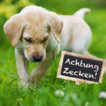 Gefährliche Zeckenbisse bei Hunden: Prävention und Therapie ...
