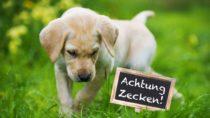 Zeckenbisse können nicht nur beim Menschen, sondern auch beim Hund zu gefährlichen Krankheiten führen. Experten erklären, wie sie ihren Vierbeiner schützen können. (Bild: DoraZett/fotolia.com)