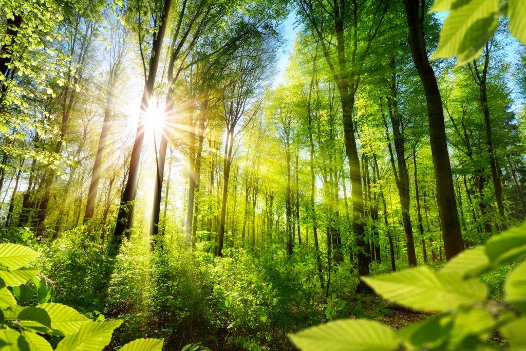 Eine natürliche Umgebung kann depressive Verstimmungen lindern. Bild: Smileys - fotolia