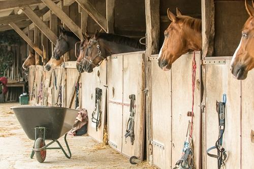 Eine Herpesvirus-Infektion kann bei Pferden im schlimmsten Fall zum Tod führen. Dennoch sind hierzulande zur Zeit keine Impfstoffe erhältlich. (Bild: Tanja Esser/fotolia.com)