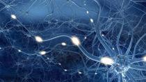 Während des Schlafs verringert sich die Aktivität der meisten Synapsen und es wird Platz für neue Inforamtionen geschaffen. (Bild: Sagittaria/fotolia.com)