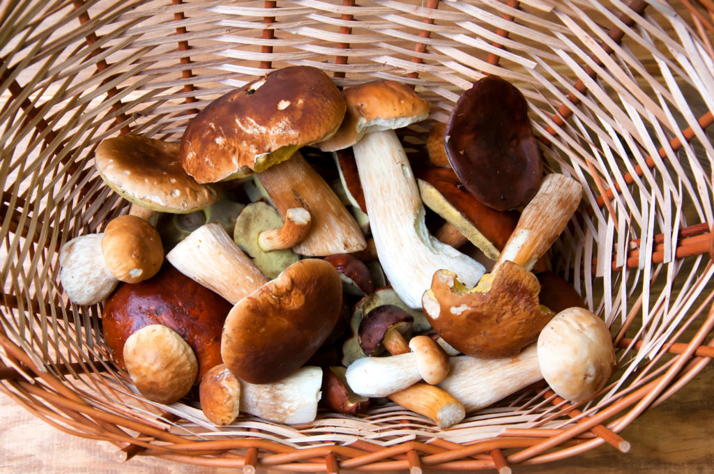 Fresh mushrooms in basket on wooden table