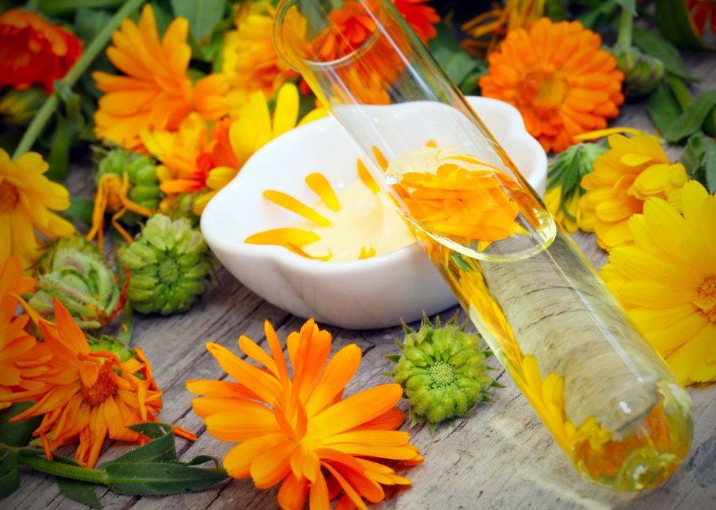 Blumen und Essenz der Ringelblume