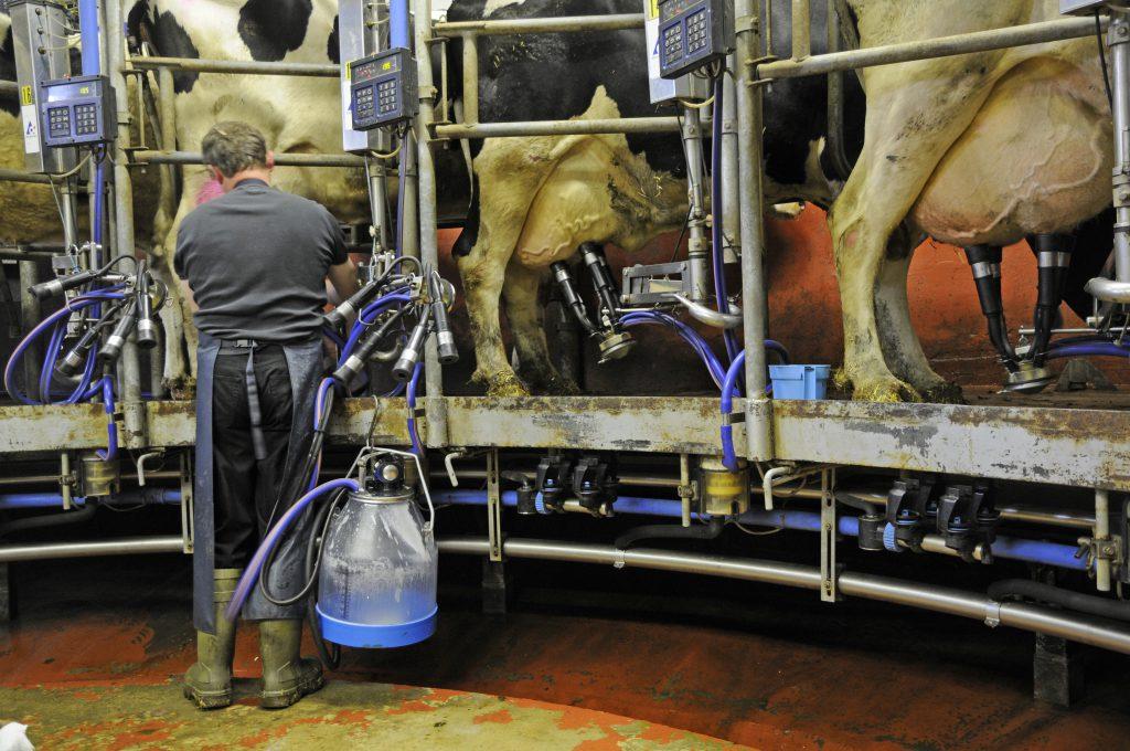 Rund jeder zehnte Liter Milch stammt aus einem entzündeten Euter und insgesamt wird mindestens jedes vierte Tierprodukt von einem kranken Tier gewonnen. (Bild: Fotolyse/fotolia.com)