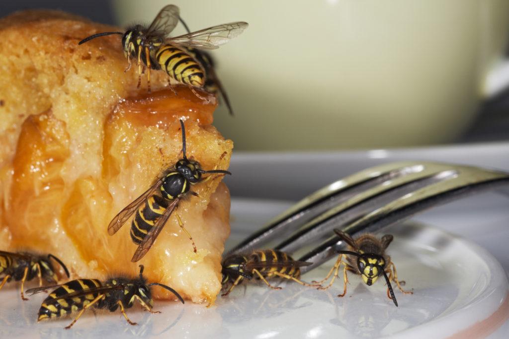 fiese insektenstiche schnelle hilfe gegen wespen und bienenstiche bei kindern. Black Bedroom Furniture Sets. Home Design Ideas