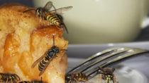 Wespen, die im Spätsommer gezielt nach Zucker suchen, sind meist besonders lästig. Die Insekten dürfen keinesfalls angepustet werden, denn das Kohlendioxid in der Atemluft versetzt sie in Angriffsstimmung. (Bild: Ingo Bartussek/fotolia.com)