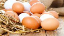 Der Eierproduzent Brandlhof hat einen Rückruf für Eier aus Freiland- und Bodenhaltung gestartet. Es waren Salmonellen gefunden worden. Diese Bakterien können verschiedene Krankheiten auslösen. (Bild: motorolka/fotolia.com)