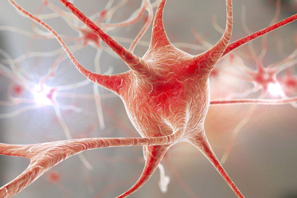 Neuronale Gehirnstrukturen. Bild: Dr_Kateryna - fotolia