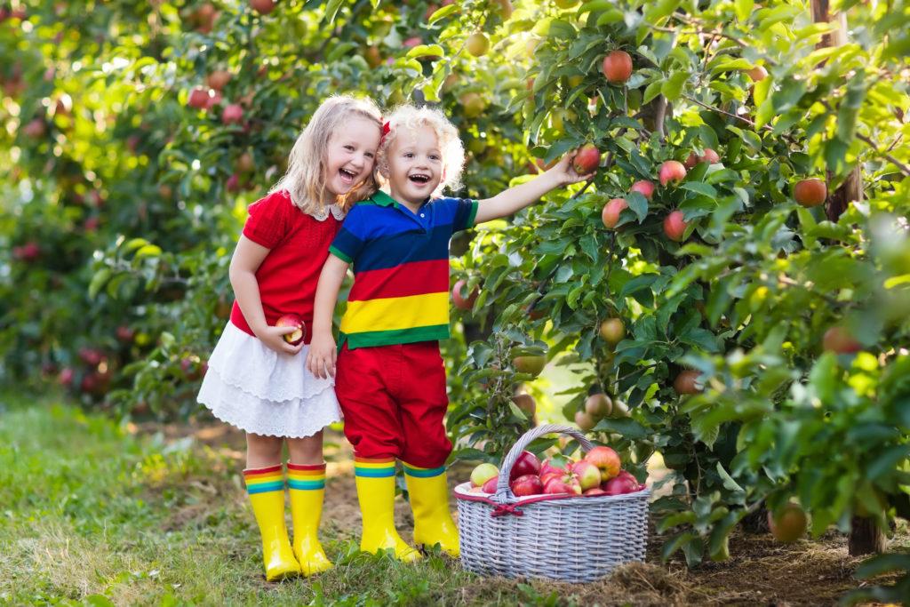 Viele Menschen mögen Äpfel zwar am liebsten frisch vom Baum, doch oft lohnt  es sich, sie erst längere Zeit zu lagern. Manche Sorten entwickeln erst dann ihr volles Aroma. (Bild: famveldman/fotolia.com)