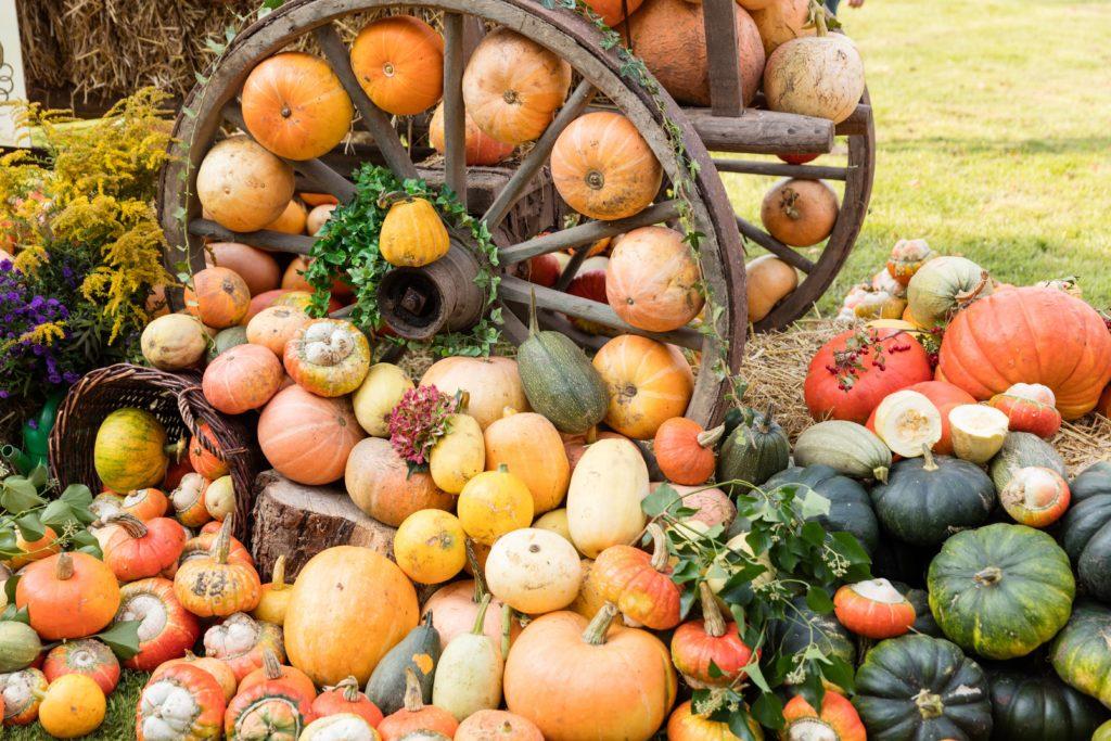 Im Herbst haben Kürbisse Hochsaison. Neben dem Hokkaido gibt es viele weitere Sorten, aus denen sich leckere Gerichte zaubern lassen. Auch der Gesundheit tut man damit Gutes. (Bild: Christian Schwier/fotolia.com)