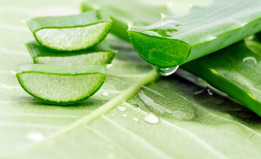 Wie gesund ist Kaktuswasser wirklich? Bild: afishman64 - fotolia