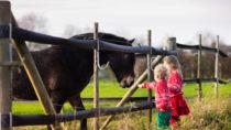 Wenig Laub kann von Pferden in der Regel gut toleriert werden. Bild: famveldman - fotolia