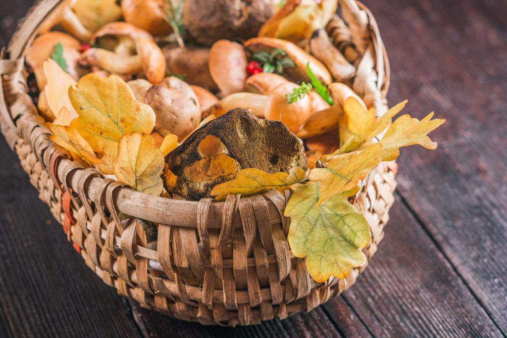 Viele Pilze sind nicht essbar und sogar lebensgefährlich. Bild:  invizbk - fotolia