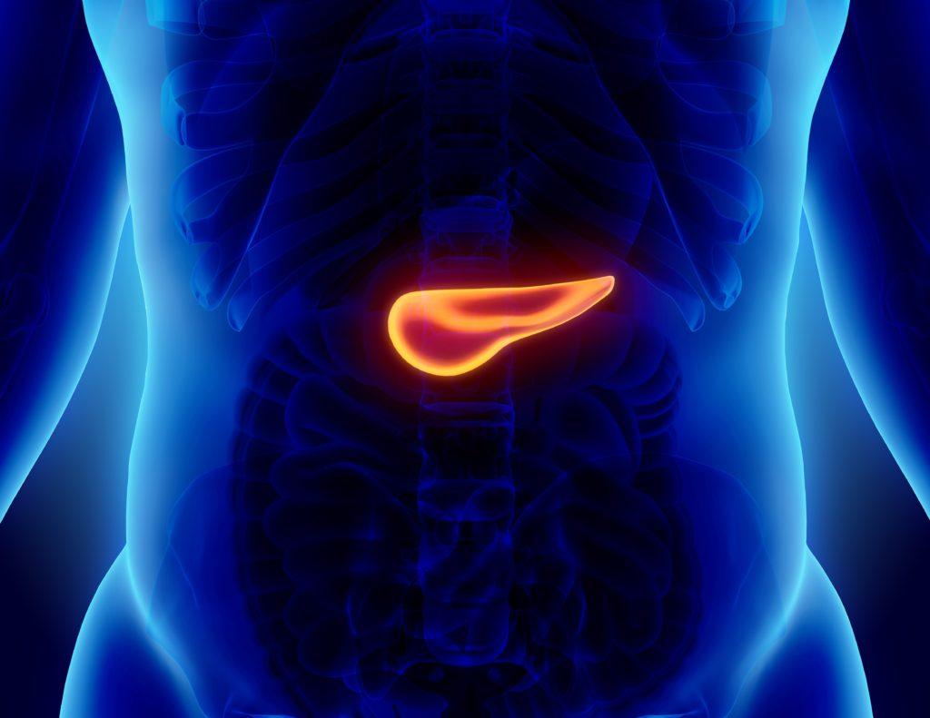 Bauchspeicheldrüsenkrebs verläuft meist äußerst aggressiv. Ein Großteil der Patienten stirbt an den Tumoren. Dieser Krebs wird oft erst spät entdeckt, da er anfangs in der Regel symptomlos verläuft. (Bild: yodiyim/fotolia.com)