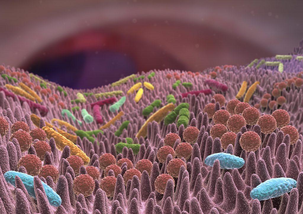 Die Darmflora hat weitreichende Auswirkungen auf den Infektionsschutz, die nun in einem neuen Modell untersucht werden kann. (Bild: Alex/fotolia.com)