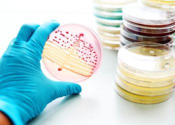 Extrem resistente Darmbakterien, gegen die selbst Reserveantibiotika nicht helfen, breiten sich laut einer aktuellen Studie immer weiter aus. (Bild: jarun011/fotolia.com)