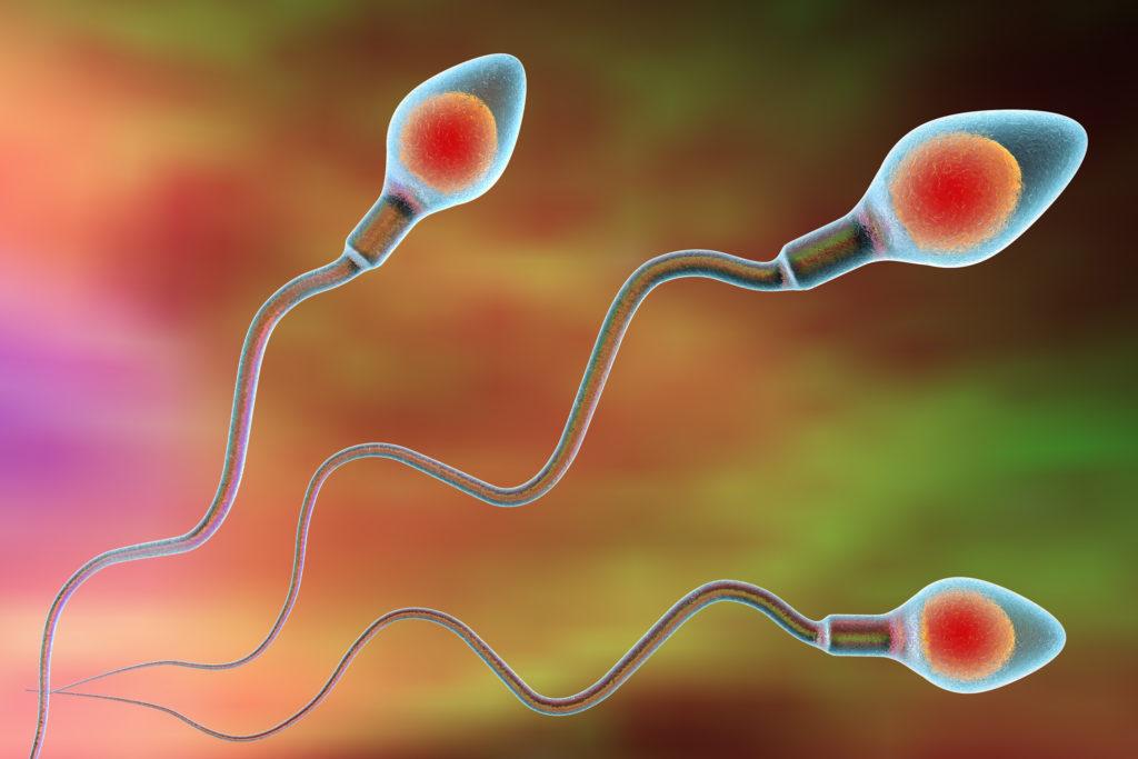 Spermidin, eine Substanz, die in männlichem Samen vorkommt, hat eine herzschützende Wirkung. Diese Erkenntnisse machen Hoffnung auf eine mögliche Behandlung von diastolischer Herzmuskelschwäche. (Bild: Dr_Kateryna/fotolia.com)