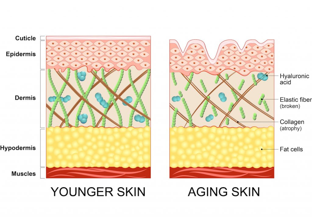 Veränderung der Haut mit zunehmenden Alter. Bild: designua - fotolia