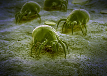 Milben verstecken sich überall in der Wohnung. Bild: Sebastian Kaulitzki-fotolia