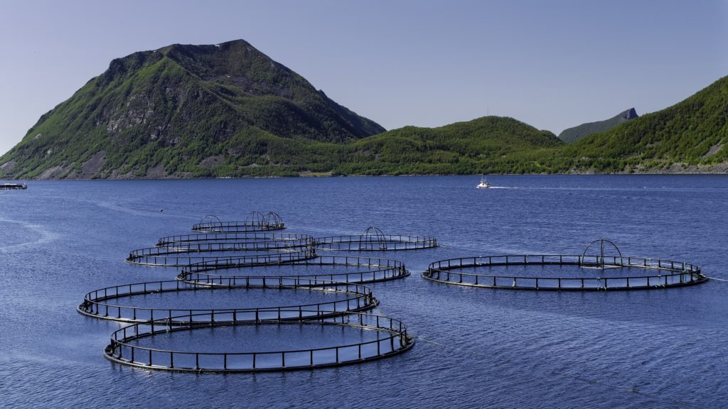 Die Umweltschutzorganisation Greenpeace warnt vor Pflanzenschutzmitteln in Speisefisch. Fisch aus Zuchtanlagen enthält häufig die Chemikalie Ethoxyquin. Diese soll krebserregend sein. (Bild: berner51/fotolia.com)