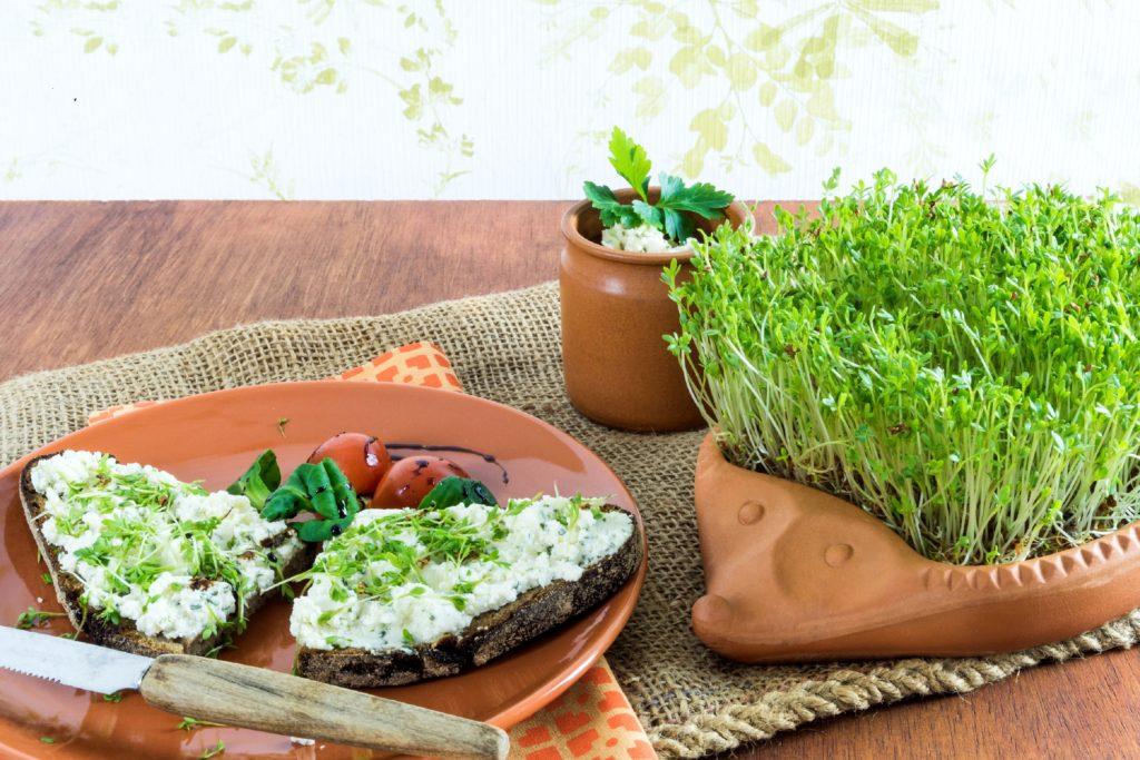 Gartenkresse steckt voller Vitamine und Mineralstoffe. Sie schmeckt hervorragend in Kräuterquark oder auf Brot. Kresse kann man auch einfach selbst anbauen. (Bild: Rangzen/fotolia.com)