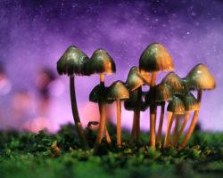 Halluzinogene Pilze können Krebspatienten dabei helfen, Ängste und Depressionen zu überwinden. Verantwortlich für die positive Wirkung ist der Stoff Psilocybin. (Bild: kichigin19/fotolia.com)