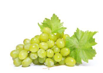 Weintrauben sind schmackhaft und gesund. Aber nur die wenigsten Menschen wissen, dass Weintrauben auch eines der höchsten Risiken für eine Erstickungsgefahr bei kleinen Kindern aufweisen. (Bild: guy/fotolia.com)