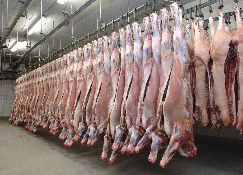 Mehrere Reihen Schweinehälften in einem Schlachthaus