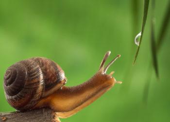 Verschiedene Pflanzen und Tiere wie Orchideen und Schnecken produzieren Klebstoffe, die auch für den Menschen von Nutzen sein könnten. Etwa in der Medizin, um Wunden zu kitten oder in der Kosmetik. (Bild: rs31/fotolia.com)