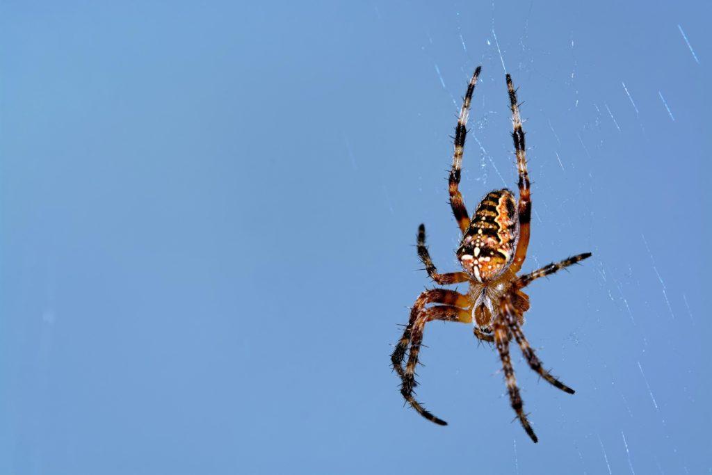 Natürliches Herzgewebe mit Spinnenseide reproduziert – Hoffnung für ...