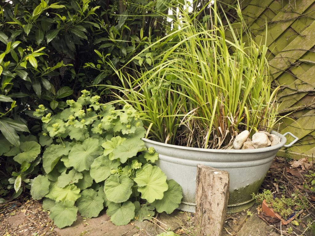 Naturgarten Selbst Anlegen Planung Gestaltung Und Pflanzen
