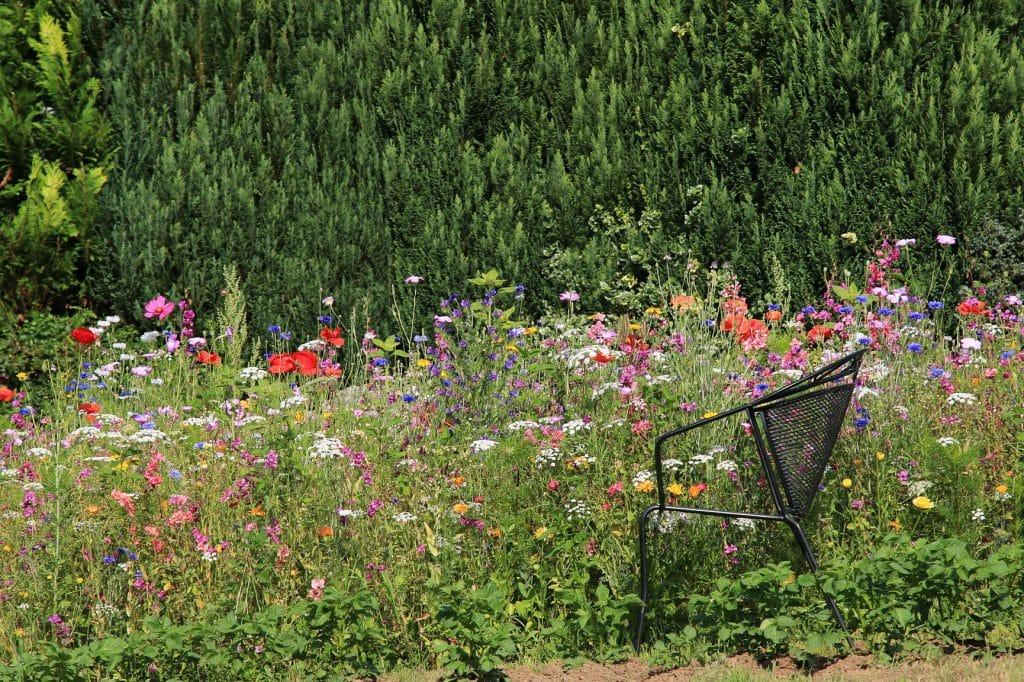 naturgarten selbst anlegen planung gestaltung und pflanzen. Black Bedroom Furniture Sets. Home Design Ideas