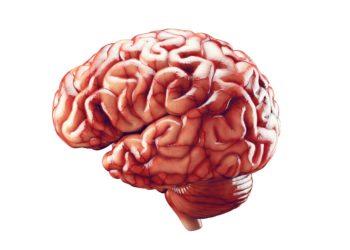 Das Gehirn ist ein äußerst komplexes System, dessen Entwicklung durch eine Vielzahl unterschiedlicher Faktoren beeinflusst wird. (Bild: eranicle/fotolia.com)