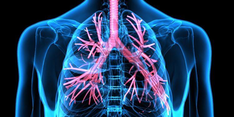 Eine grafische Darstellung der Atemwege.