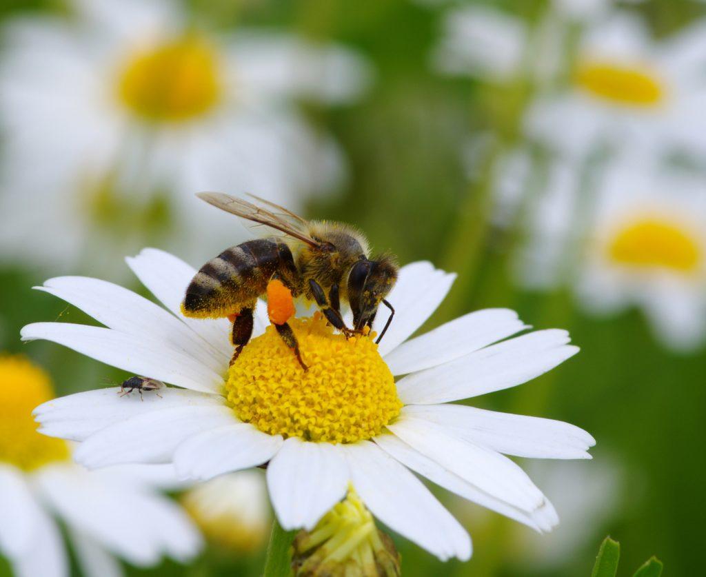 starke gift für wespen