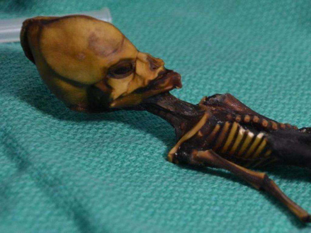 Rätsel um Mini-Mumie aus Chile gelöst