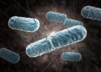 Die Listeriose wird durch Stäbcehnbakterien aus der Gattung der Listerien ausgelöst (Bild: Sagittaria/fotolia.com)