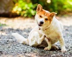 Hund kratzt sich das Fell